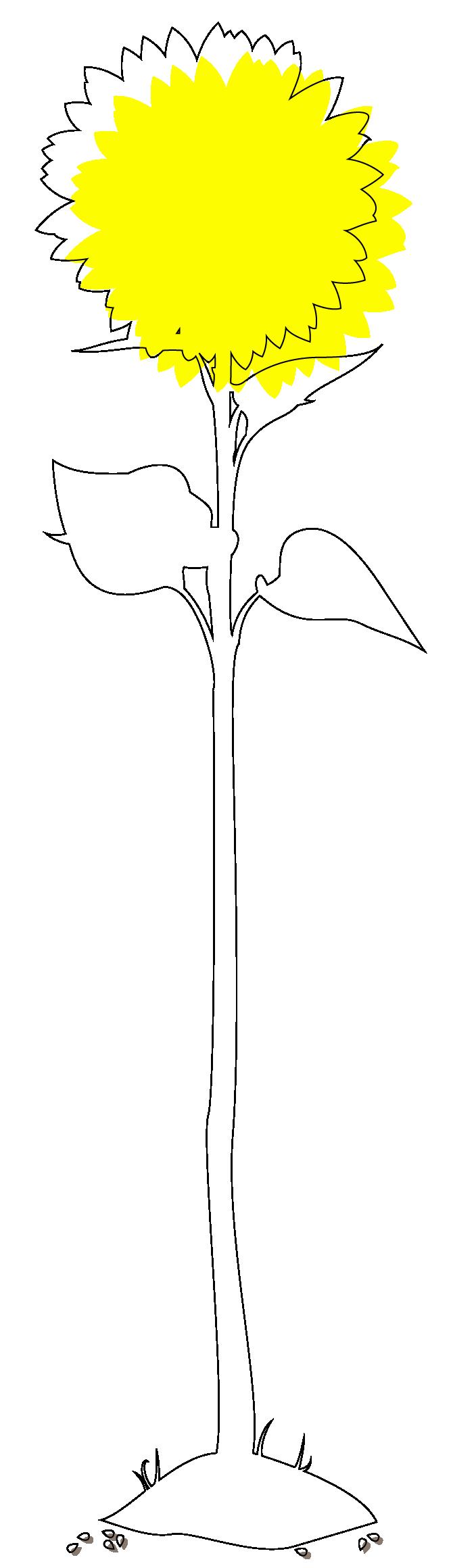 tournesol-01
